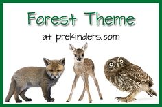 Forest Theme for Preschool