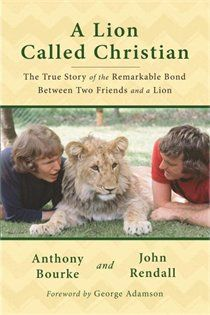 20 Best A Lion Called Christian images in 2013 | Lions, Leo