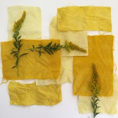 Goldenrod on linen, cotton, silk, and wool from my Medicinal Plant Dye workshop. Natural dyes make the prettiest yellows. www.katrinarodabaugh.com
