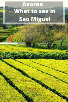Must see spots in Sao Miguel- Azores.  Tea tour and more!