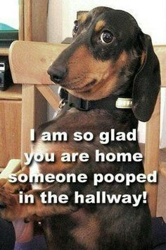 I am so glad you are home. Someone pooped in the hallway!