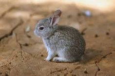 Image result for little bunnies
