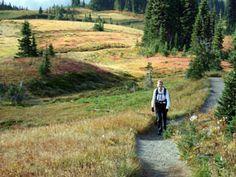 Hiker on the Skyline Trail - Mt. Rainier Park