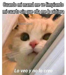 """Gatos Cool publicó en Instagram: """".. . . . #memesdegatoscool #gatoscool😸 #gatos_cool #gato"""" • Mira todas las fotos y los videos de @gatoscooloficial en su perfil."""