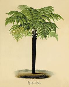 Palm tree art print antique Botanical Art by VictorianWallArt