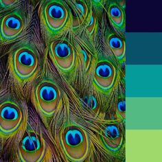 Peacock color palette for this month's coloring challenge.