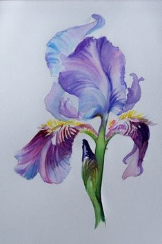 Iris: right upper arm, more galaxy colors Iris Tattoo, Iris Painting, Acrylic Painting Canvas, Watercolor Flowers, Watercolor Paintings, Tattoo Watercolor, Watercolors, Flor Magnolia, Flower Drawing Tutorials
