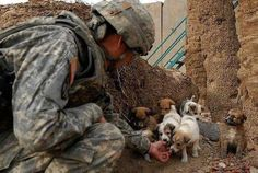 A U.S. Army Soldier found some adorable pups!