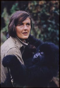 National Geographic, Academy Award-Winning Producer James Marsh and Tigress Productions To Partner On Dian Fossey: Secrets In The Mist Brave, Amazing Animal Pictures, St Louis Zoo, Dian Fossey, Llama Face, Jane Goodall, Mountain Gorilla, Extraordinary People, Baboon