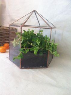 Large Terrarium Planter, Indoor Garden, Geometric Glass Hexagon, Wedding  Decor, Table Centrepiece, Grandparent Gift