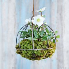Sphere Hanging Basket in Gardening PLANTERS Outdoor Planters All-Weather at Terrain. Cute to plant some bee and butterfly loving perennial plants in these and hang from trees. Outdoor Planters, Garden Planters, Hanging Planters, Hanging Baskets, Outdoor Gardens, Hanging Gardens, Garden Spheres, Garden Basket, Deco Nature