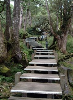 Wooden trails in Taipingshan National Forest, Taiwan (Travel in Real Taiwan).