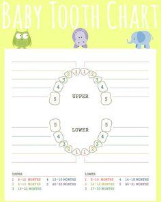 Free Printable Teething Chart, Baby Tooth Chart, Teething chart for babies, printable teething chart, infant teething chart
