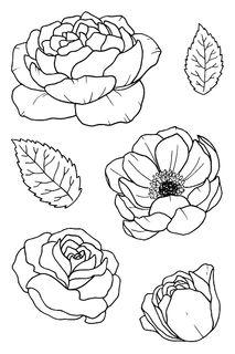 Shop for Jane's Doodles Clear Stamps - Bloom. Flower Line Drawings, Botanical Line Drawing, Flower Sketches, Floral Drawing, Outline Drawings, Art Drawings, Drawing Lessons, Floral Illustrations, Botanical Illustration