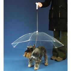 The Dogbrella.  LOL so need this for my dog if it ever starts raining in TX again.