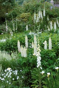 'Noble Maiden' A traditional cottage garden plant with towers of long creamy-white flower spikes with a peppery scent.A traditional cottage garden plant with towers of long creamy-white flower spikes with a peppery scent. Plants, Beautiful Gardens, White Flowers, White Plants, Cottage Garden Plants, Perennials, Moon Garden, White Gardens, Shade Garden