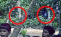 Alien Caught On Film In Brazil Rainforest [Video]