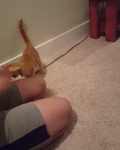 My cat plays fetch http://ift.tt/2m6KhPV