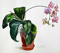 January bloom | Hot Off the Easel Floral Watercolor, Watercolor Paintings, Beach Scenes, Love Pet, Still Life, January, My Arts, Bloom, Landscape