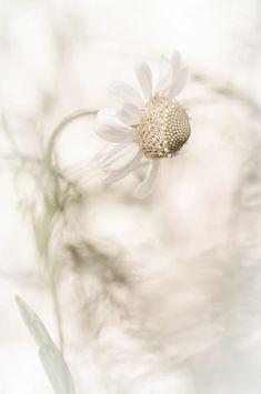 White Fantasy Photograph - White Fantas
