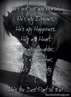 "I can't live without my horse; I never grew out of the ""I Love Horses So Freaking Much"" Stage, evidently. Equine Quotes, Equestrian Quotes, Equestrian Problems, Pretty Horses, Beautiful Horses, Animals Beautiful, My Horse, Horse Girl, Horse Tack"