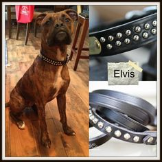 "Elvis opted for the new collar instead of the ""Blue Suede Shoes""!  http://www.kippyandco.com/products/personalized-dome-studded-dog-collar"