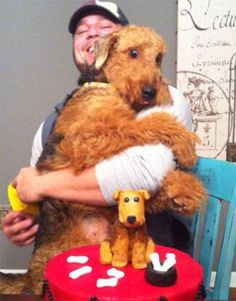 Scout typically portrays the epitome of the Airedale Terrier. A true ambassador… Fox Terriers, Airedale Terrier, Chien Fox Terrier, Wire Fox Terrier, Irish Terrier, Animals And Pets, Funny Animals, Cute Animals, Best Puppies