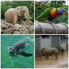 How to enjoy Colchester zoo in the rain John Lewis Penguin, Colchester Zoo, Writing About Family, Family Days Out, Grandchildren, Penguins, Elephant, Rain, Easter
