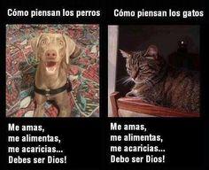 Por si no sabías.... ;) Afiche de @GuatexAnimales :)