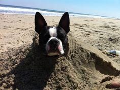 Takin' a beach nap.