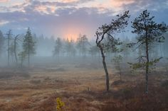 Beginning of the summer  Photo and caption by Jari-Matti Salonurmi    A magic moment in the midnight in northern Finland in late may 2012, taken on a swamp towards the midnight sun and nighthaze.