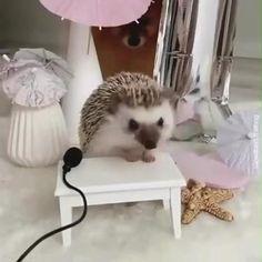 Cute Little Baby, Cute Little Animals, Cute Funny Animals, Cute Babies, Cutest Animals On Earth, Animals And Pets, Funny Animal Videos, Animal Memes, Funny Ferrets