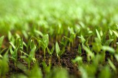 Rotazioni, cover cropping, falsa semina, pacciamatura: le tecniche per contenere le infestanti in agricoltura biologica provengono in larga parte dalle buone pratiche del passato, ma ci sono anche...