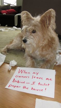 """""""When my owners leave me behind - I toilet paper the house."""" ~ Dog Shaming - toilet paper the house"""