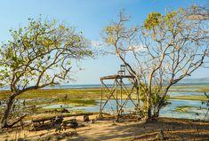 Taman Nasional Alas Purwo adalah taman nasional yang terletak di Kecamatan Tegaldlimo dan Kecamatan Purwoharjo, Kabupaten Banyuwangi, Jawa Timur, Indonesia. Tours, Holiday, Painting, Wings, Vacations, Painting Art, Holidays, Paintings, Painted Canvas