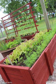 I vår har vi anlagt en köksträdgård intill vårt hönshus här på gården! Jag har länge önskat mig en plats att kunna odla på men även ha krukor o byttor med blommor! Vi grävde bort en bit av gräsmattan, la matta o grus o så byggde vi en pergola med armeringsnät som tak! Tanken är att någon grön växt ska slingra i det rostiga nätet.. Big Leaf Plants, Growing Gardens, Vintage Garden Decor, Interior Garden, Garden Stones, Garden Beds, Garden Inspiration, Vegetable Garden, Beautiful Gardens