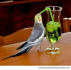Little bird wants a drink too | Perfectly Timed Pics.  do we really want 2 c a drunk bird?  my son's a shrink in a NY city hosp.  he says the birds & squirrels around the bldng r all crazy from consuming pts ditched meds!