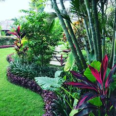 Front Yard Garden Design - The tropical garden is a garden concept designed to resemble a tropical forest. Plants commonly used or characteristic of a tropical garden is a plant that has many shades of color and has a wide l… Balinese Garden, Bali Garden, Lush Garden, Dream Garden, Garden Plants, Balcony Garden, Bamboo Garden Ideas, Backyard Plants, Garden Oasis