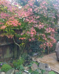 Winter (or still autumn?) colours are out in force!