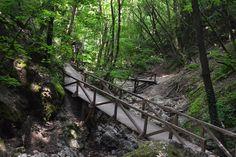 Szurdokerdő a Pilisben - Odakint Forest Landscape, Garden Bridge, Hungary, Beautiful World, Outdoor Structures, Nature, Trips, Travel Advice, Viajes