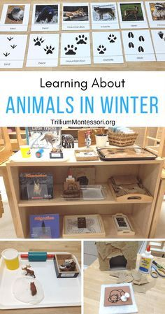 Preschool Activities for learning about Animals in Winter