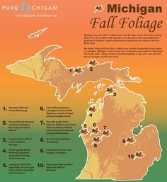 Today on our blog, Todd and Brad Reed Photography, a father-son team based in Ludington, share with us their favorite spots in Michigan for fall color: http://puremi.ch/Ujfb1H    Download a full-sized version of this infographic with their picks here: http://puremi.ch/QZOAbt    Where's your favorite place to take a fall color tour in Michigan? —