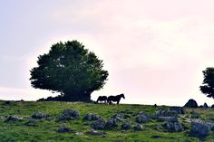 #trees #nature #woods #photography #horses #landscape #italy #southitaly #italiadascoprire