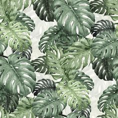 Botany Monstera