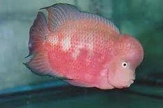 Google Image Result for http://badmanstropicalfish.com/who/mystery_june_04.jpg