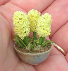 miniature hyacinth