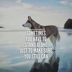 Sometimes You Have To Stand Alone life quotes quotes quote life motivational