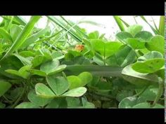 SAMOUZDRAVOVANIE ČAKIER V PRÍRODE - YouTube Salvia Officinalis, Kraut, Plants, Juni, Reiki, Garden Ideas, Spirit, Fitness, Life