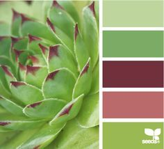 sage green color palette - Google Search