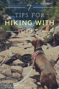 Helpful Tips for Hiking with Dogs and what to pack for fun and keeping your furry friends safe! via @KaufmannsPuppy
